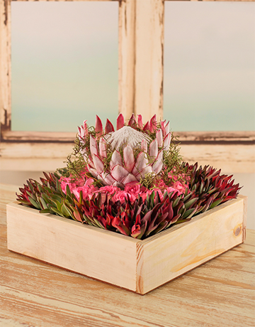 Beautiful Protea from NetfFlorist