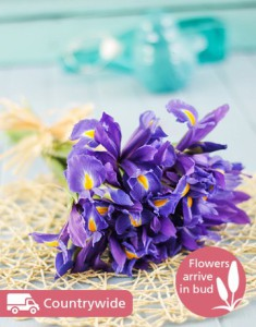 Winter Irises