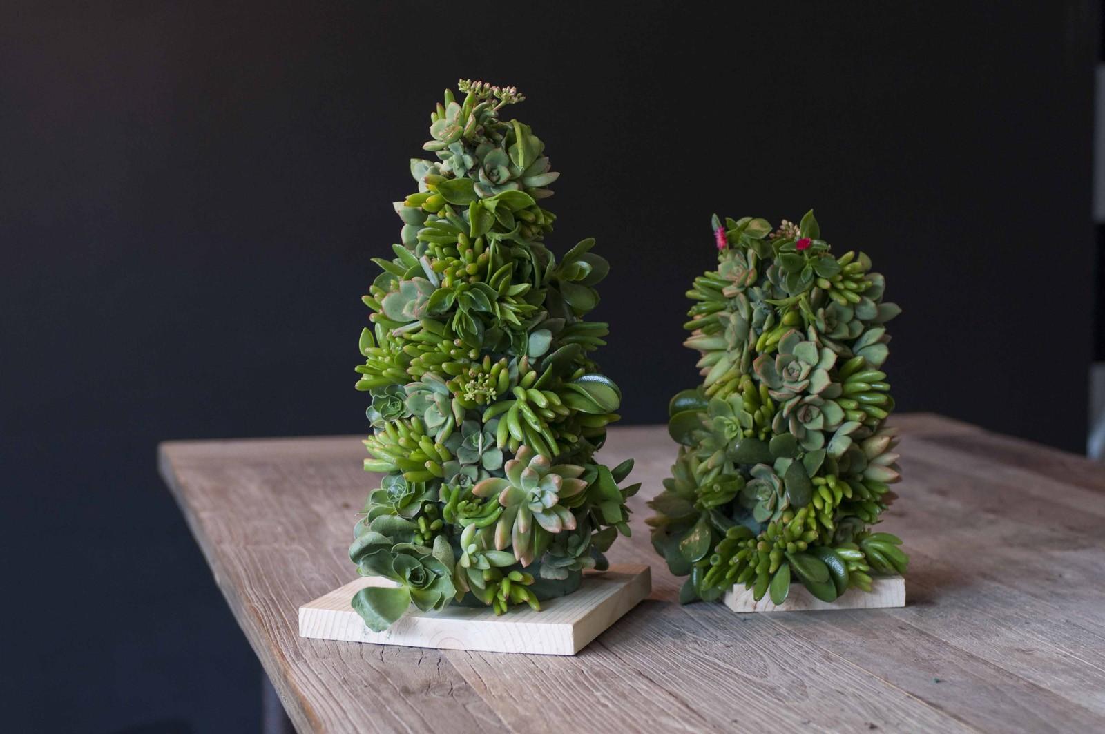 succulent tree 1