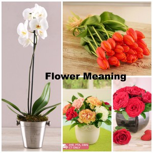flower meaning