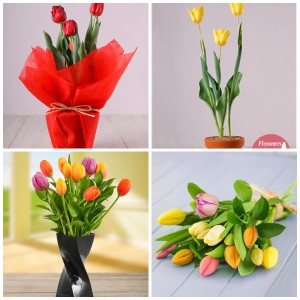 Tulips potted plants and bouquets available.