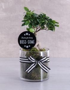 Boss's Day plants