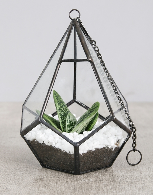 Find plants gifts for everyone succulents