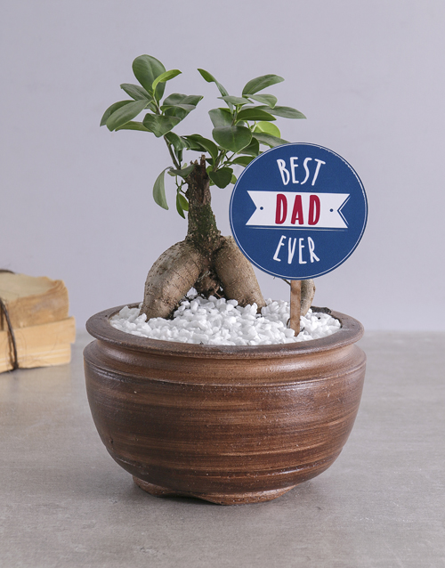 Find plants gifts for everyone like bonsai trees