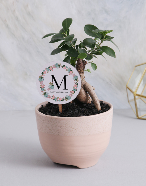Mother's Day gift ideas plants